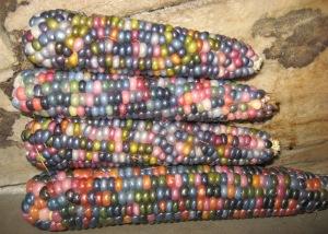 Corn, Glass Gem H rev