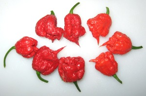 Pepper, Carolina Reaper 11-03-2013 B rev