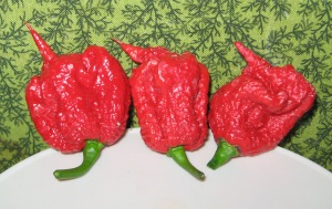 Pepper, Carolina Reaper 11-03-2013 F rev