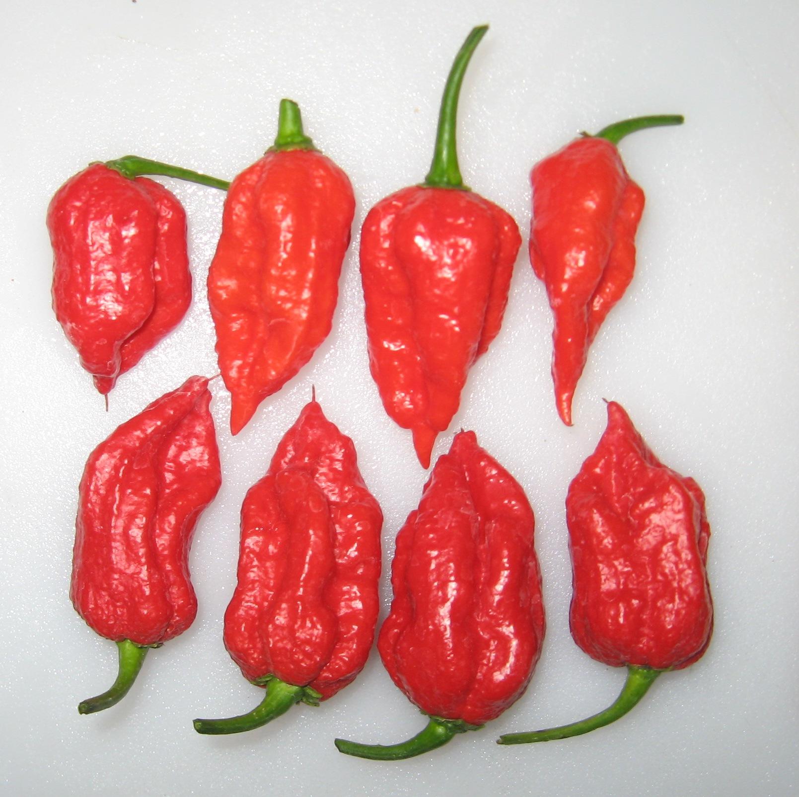 carolina reaper pepper harvest delectation of tomatoes etc