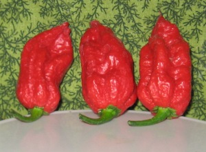 Pepper, Carolina Reaper 11-03-2013 I rev