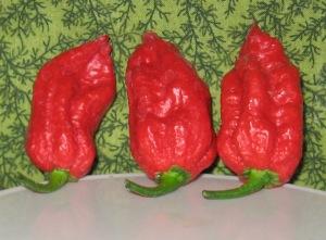 Pepper, Carolina Reaper 11-03-2013 I rev