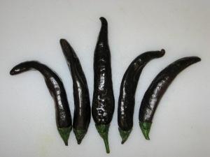 Pepper, Isleta 11-21-2013 C rev