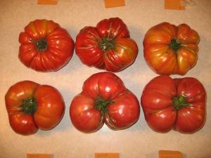 Big Tomatoes 8-30-2014 C