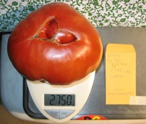 Big Zac (2.745 DT 2014)(3.75 Catapano 2007) E