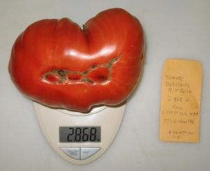 Delicious (2.868 DT 2014)(5th gen. 7.75 Graham 1986) B rev