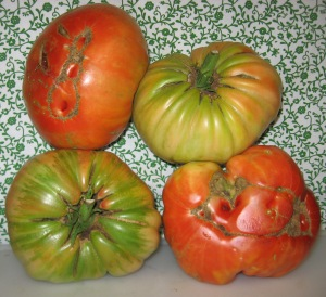 Giant Tomatoes (11.682 for 4 DT 2014) B