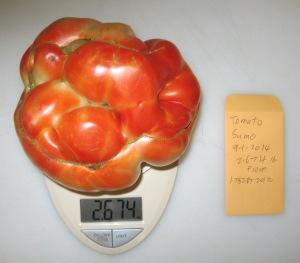 Sumo (2.674)(1.782 DT 2012) C rev