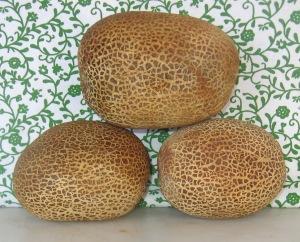 Cucumber, Poona Kheera (0.832 DT 2014) D