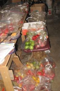 Seed Processing 10-26-2014 B
