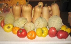 Squash and Melon harvest 10-27-2014 D rev