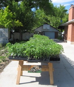 Seedlings for Sale 5-24-2015 D