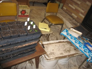 Seedling Production 4-21-2015 A
