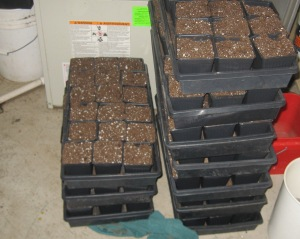 Seedling Production 4-21-2015 E