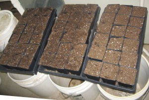 Seedling Production 4-21-2015 F