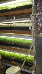 Seedling Production 4-21-2015 G