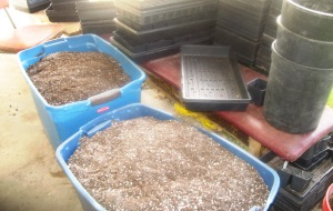Seedling Production 4-22-2015 L