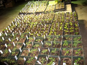 Seedlings 4-14-2015 G