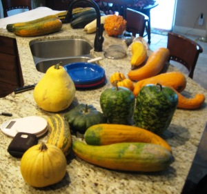 Processing fully mature summer squash for seeds, 1-10-2016